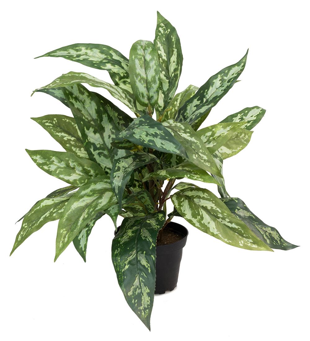 Mr Plant Krukkeplanter