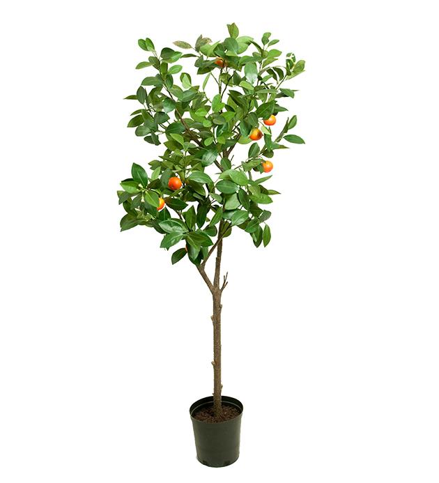 Mr Plant Trær