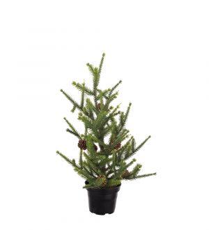 Mr Plant Gran H45 cm