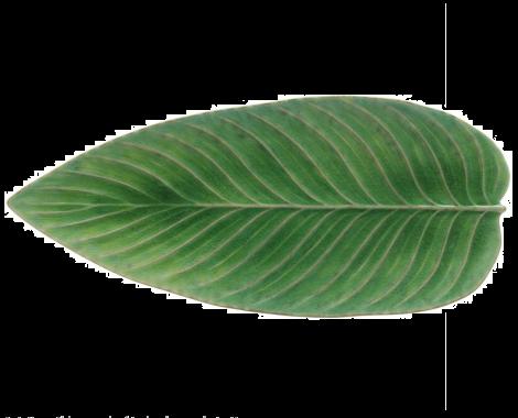 Costa Nova Riviera serveringsfat løv grønn/sort 40 cm