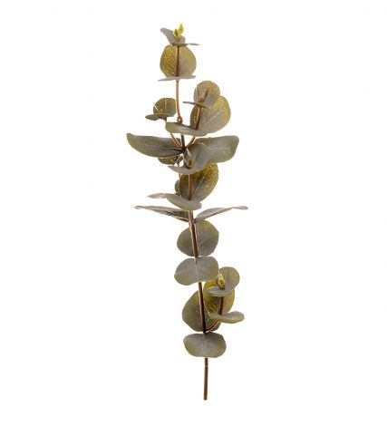 Mr Plant Eucalyptus 40 cm
