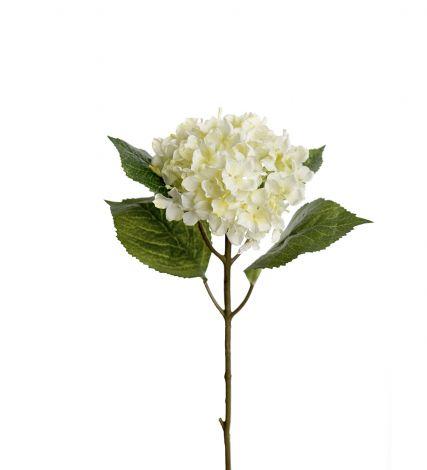 Mr Plant Hortensia 40 cm