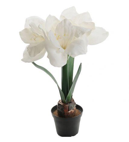 Mr Plant Amaryllis 45 cm