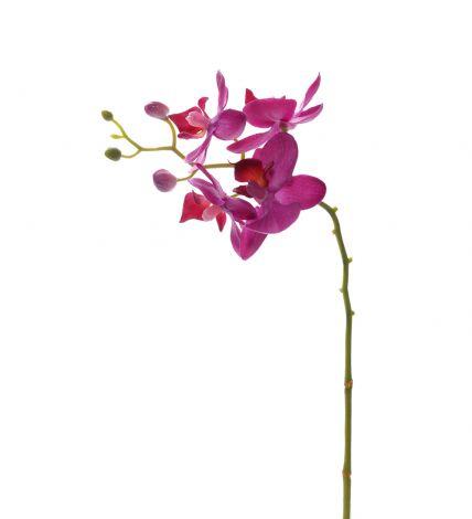 Mr Plant Phalaenopsis 28 cm