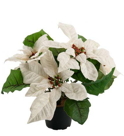 Mr Plant Julestjerne 23 cm