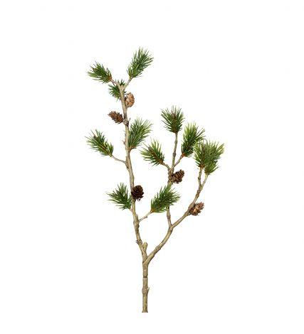Mr Plant Tallkvist 60 cm