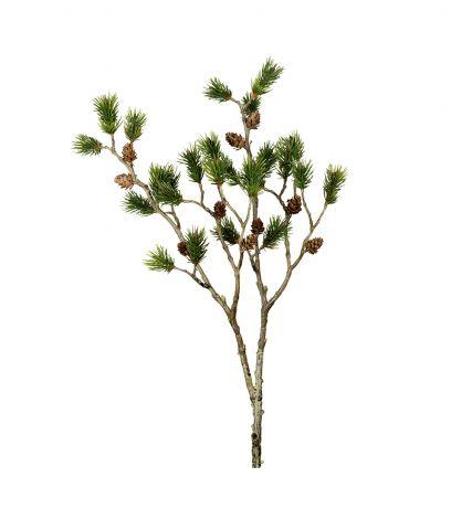 Mr Plant Tallkvist 80 cm